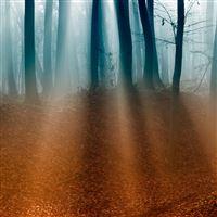 Autumn Forest iPad Air wallpaper