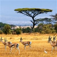 antelopes iPad Air wallpaper