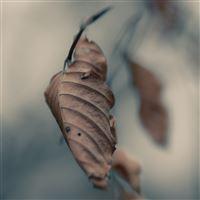 Dried Leaf Macro iPad Air wallpaper