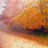 Foggy Autumn Morning iPad Air wallpaper