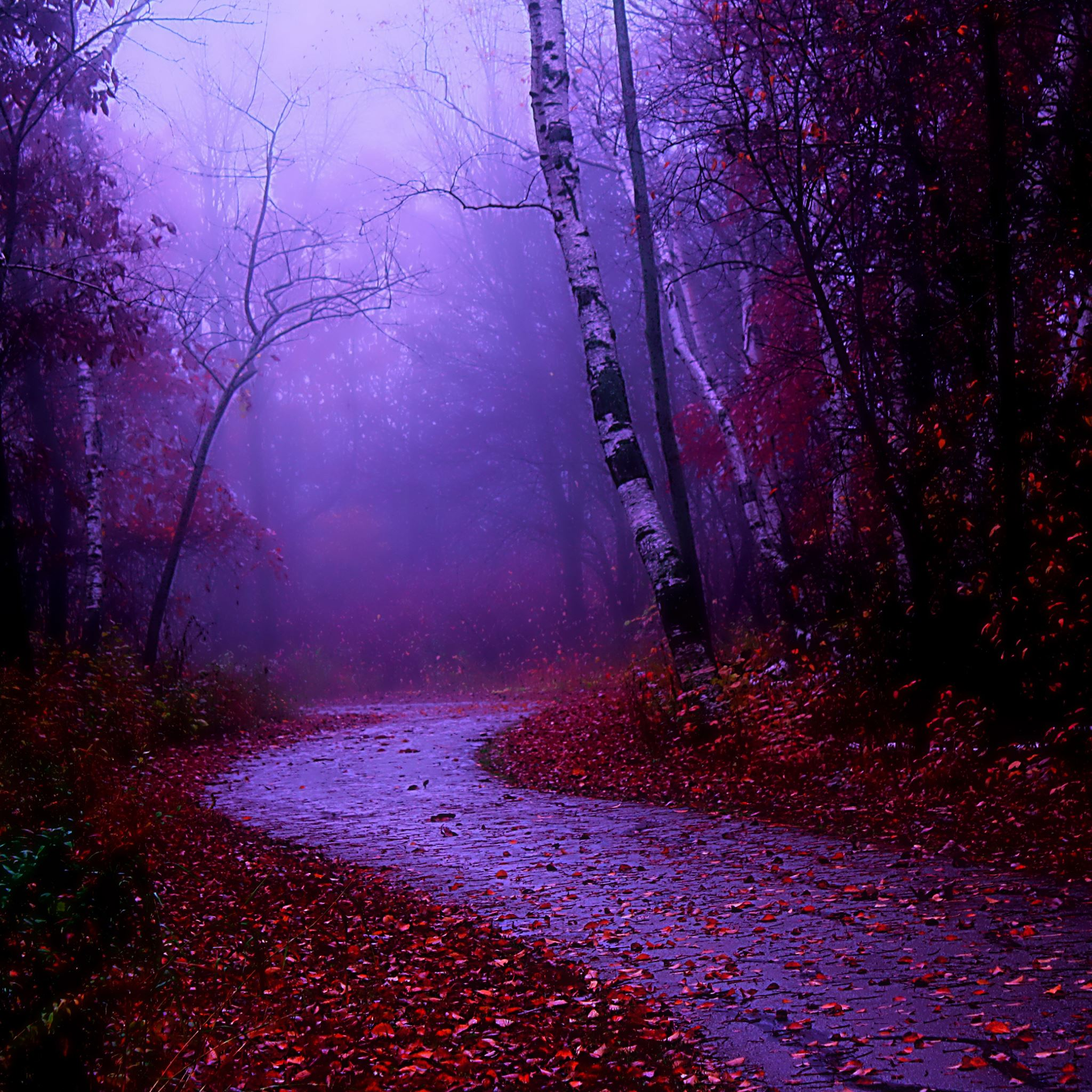 Misty Morning Walk IPad Air Wallpaper Download