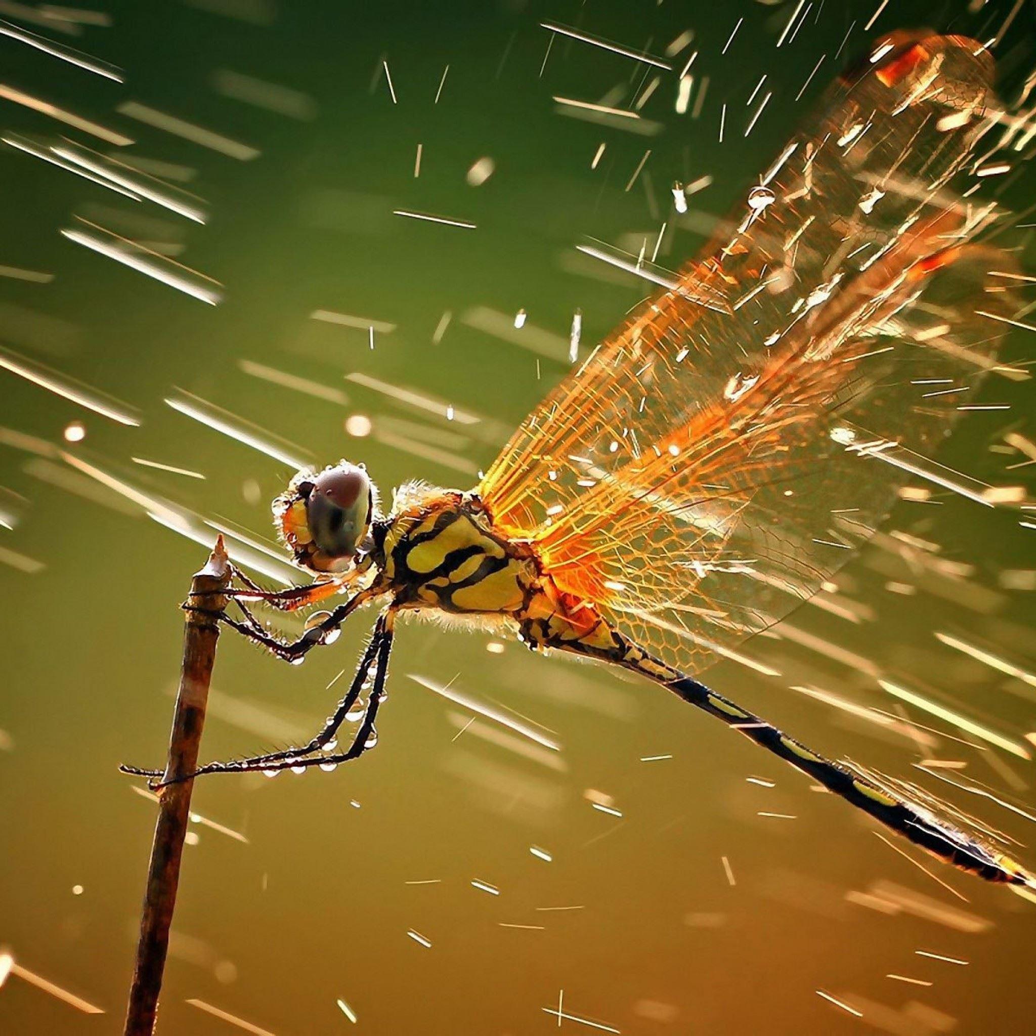 Dragonfly in rain iPad Air wallpaper