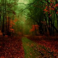 Misty Autumn iPad Air wallpaper