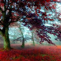 Red Effect Autumn Forest iPad Air wallpaper