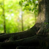 Summer Tree Trunk iPad Air wallpaper