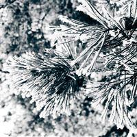 Christmas Snow Tree CLoseup iPad Air wallpaper