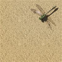 Dragonfly Insects Nature iPad Air wallpaper