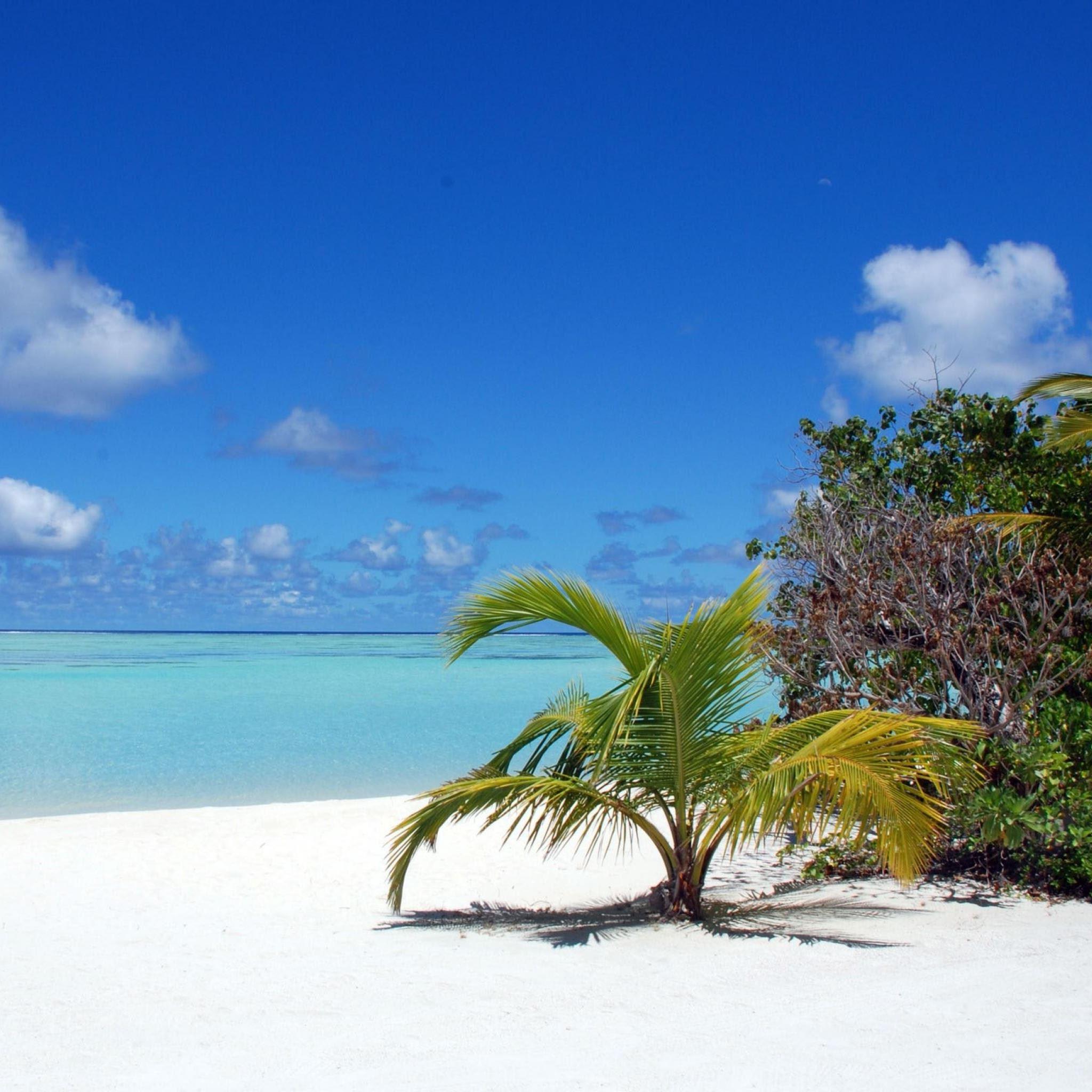 Maldives Beaches Palm Trees iPad Air wallpaper