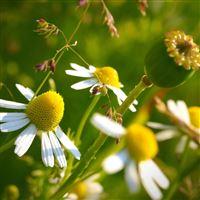 Nature Little Flower Towards Sunlight iPad Air wallpaper
