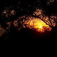 Nature Sunset In Forest iPad wallpaper