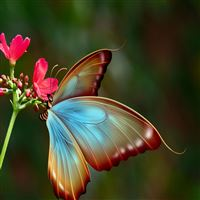 Silky Butterfly Art iPad Air wallpaper