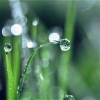 Bokeh Leaf Raindrop Nature Pure iPad Air wallpaper