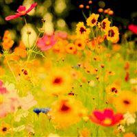 Flower Garden In Riotous Profusion iPad Air wallpaper