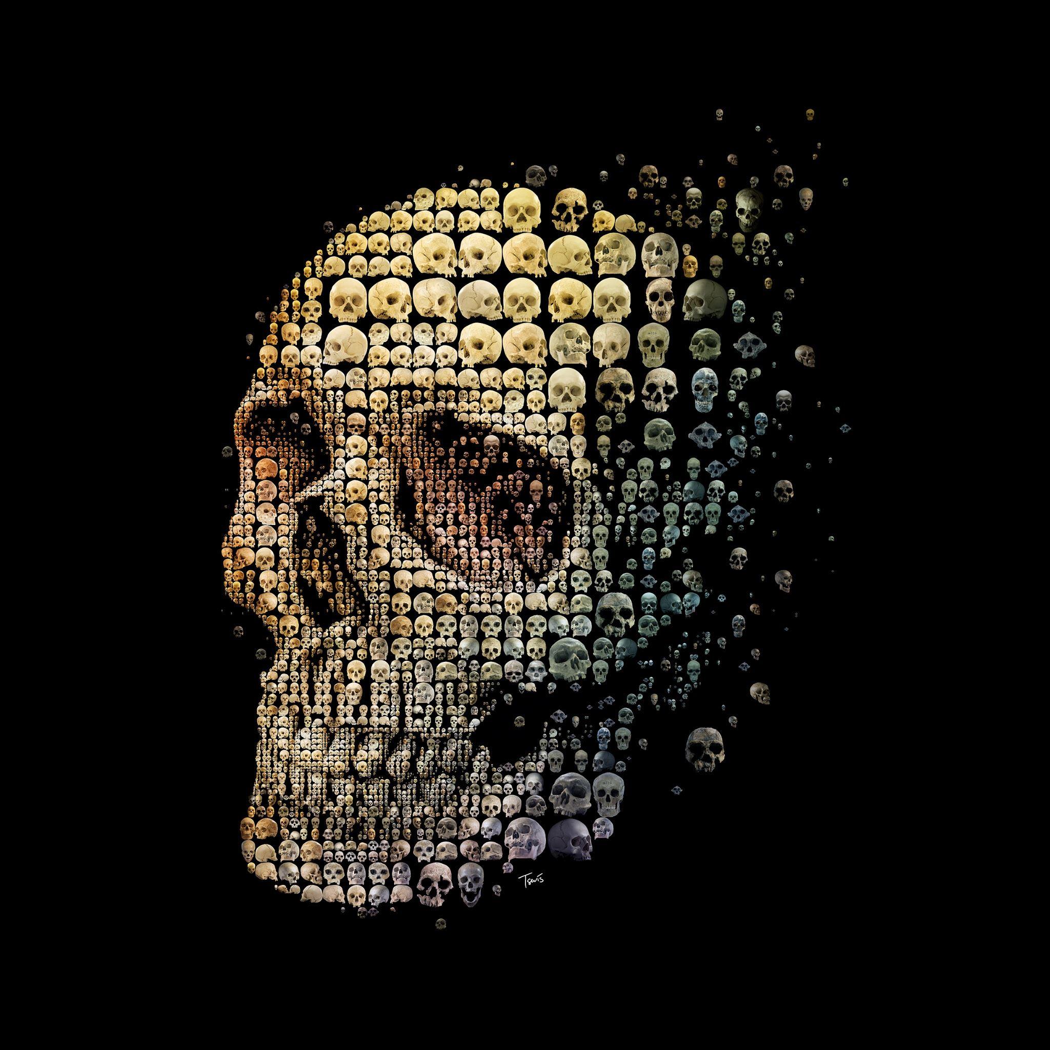 skull evolution cool ipad air wallpaper download | iphone wallpapers