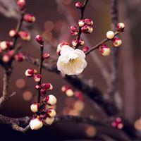Spring Nature Flower Bud Tree Twigs iPad Air wallpaper