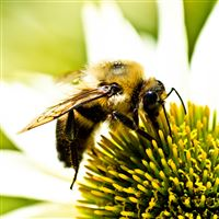 Nature Hard Bee On Flower iPad Air wallpaper