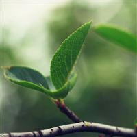 Soft Green Leaf Close Up iPad Air wallpaper
