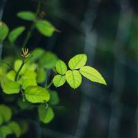 Green Leaves Close Up iPad Air wallpaper