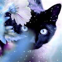Mystery Black Cat Behind Shiny Flower iPad Air wallpaper