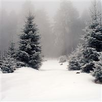 Heavy Snow Pine Forest iPad Air wallpaper