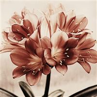 Vintage Flowers Drawn Art Macro iPad Air wallpaper
