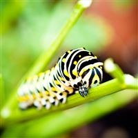 Branch Caterpillar Macro Bokeh iPad Air wallpaper