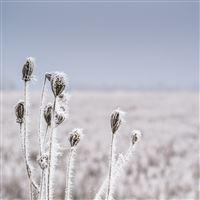 Snow Winter Flower Bokeh Nature iPad Air wallpaper