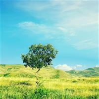 Nature Grassland Tree Field Sunny Skyscape iPad Air wallpaper