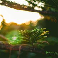 Morning Sunlight Green Branch Bokeh iPad wallpaper