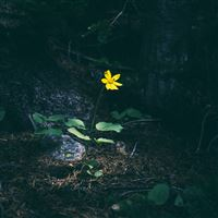 Flower Yellow Forest Wood Lonely Dark Nature iPad Air wallpaper