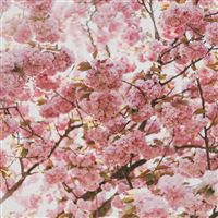 Spring Flower Pink Blossom Bokeh Nature iPad Air wallpaper