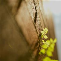 Morning Sunlight Bud Leaf Wall In Your Shadow iPad Air wallpaper