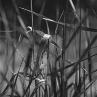 Grass Lawn Flower Dark Bw Leaf Rain iPad Air wallpaper