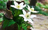Spring Wildflowers Broken Flowerpot iPad Air wallpaper