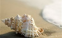 Whelk Shell Beach Wave iPad Air wallpaper