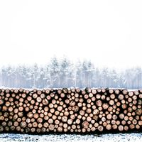 Winter Snow Wood Forest Nature iPad Air wallpaper