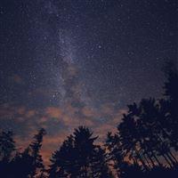Night Sky Stars Milkyway Wood Nature Blue iPad Air wallpaper