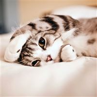 Cute Lovely Lied Kitten Animal iPad Air wallpaper