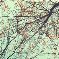 Autumn Cool Sparse Branch Twig Sky View iPad Air wallpaper