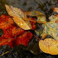 Nature Fall Autumn Leaves Dew Waterdrop iPad wallpaper