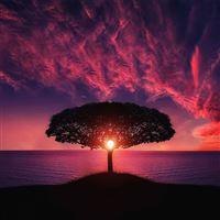 Sea Tree Purple Sky Nature iPad Air wallpaper