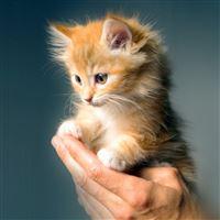 Animal Cute Kitten Cat Nature iPad Air wallpaper