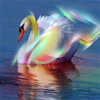 Colorful Feather Swan Swimming Lake Ripple iPad Air wallpaper