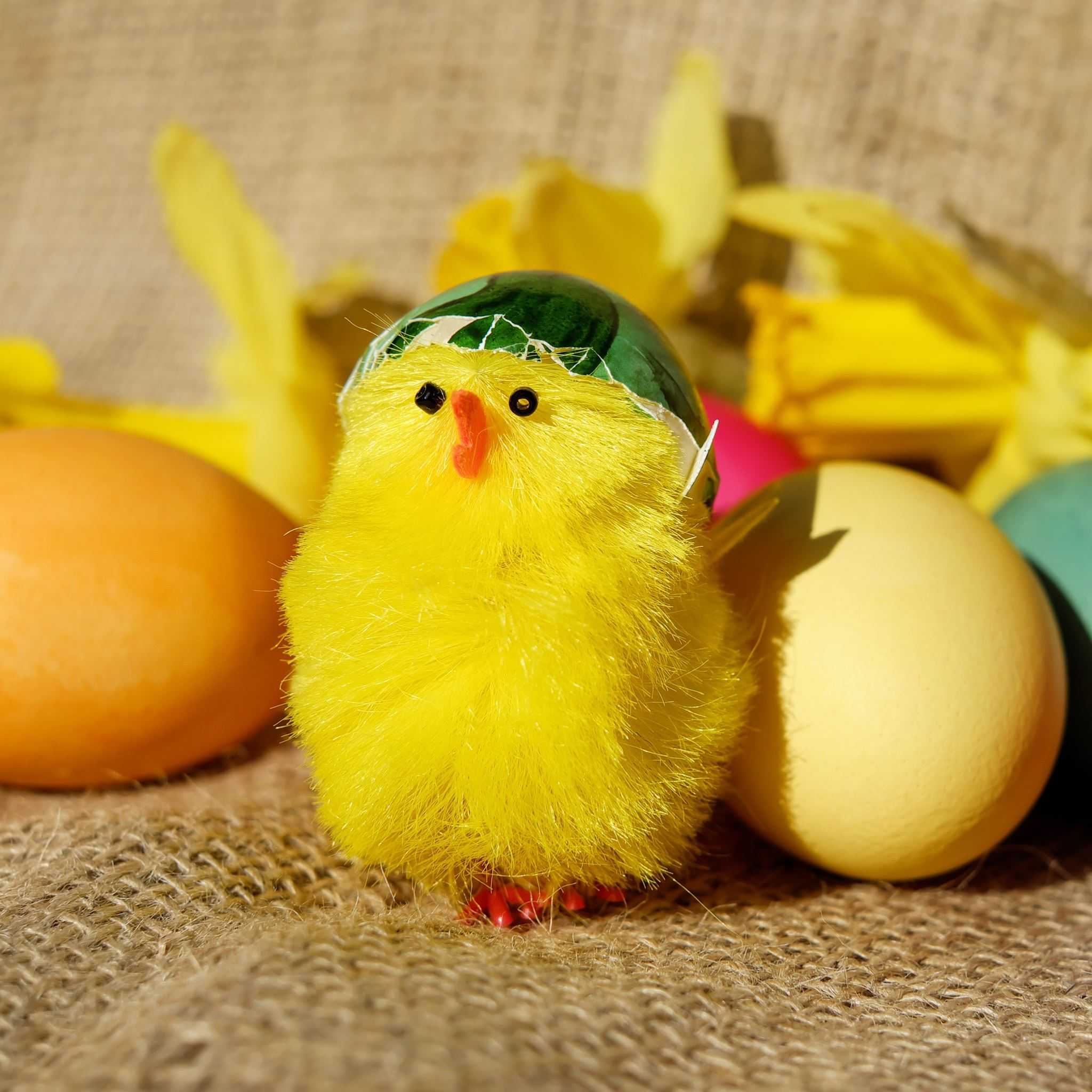 Chick Eggs Easter iPad Air wallpaper