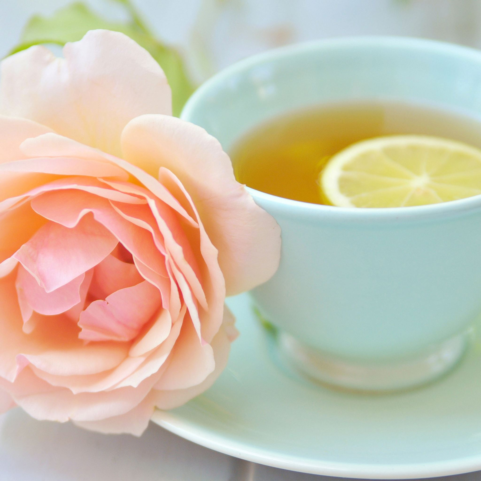 Tea Cup Lemon Rose iPad Air wallpaper