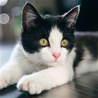Kitten Cat Spotted iPad Air wallpaper