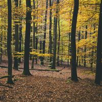 Nature Trees Autumn Foliage iPad Air wallpaper