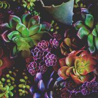 Fleshy Flowers Houseplants Leaves iPad Air wallpaper