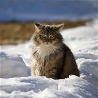 Cat Winter Fluffy Snow iPad Air wallpaper