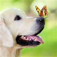 Dog Muzzle Butterfly Tongue Sticking Out Spring Summer iPad Air wallpaper
